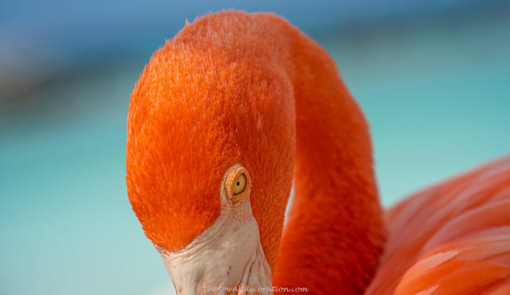 Download Free WallPaper photowalldecoration Flamingo Animal
